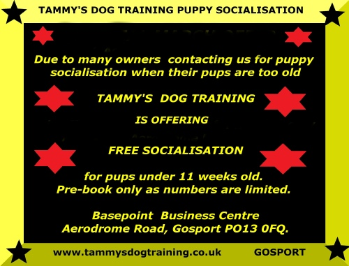 Pawsitive Results Dog Training Reviews